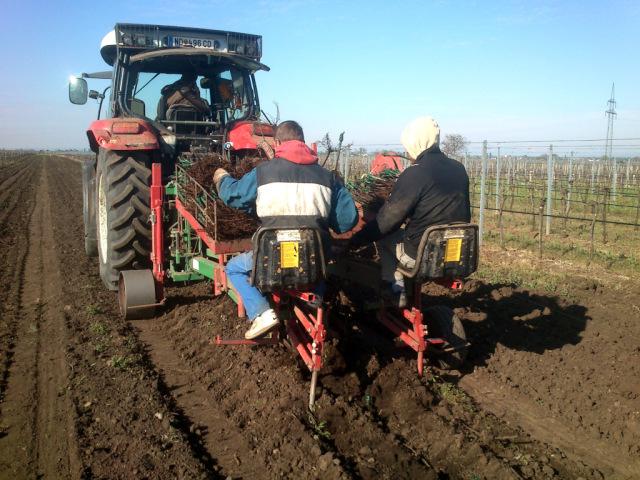 Ein Traktor von hinten. Er zieht ein Gerät das eine Furche in den Boden gräbt. Es sitzen zwei Menschen nebeneinander darauf. Vor ihnen je ein Bündel junger Reben, die sie zwischen ihnen in die Maschine einlegen, die die Reben dann in die Erde setzt.