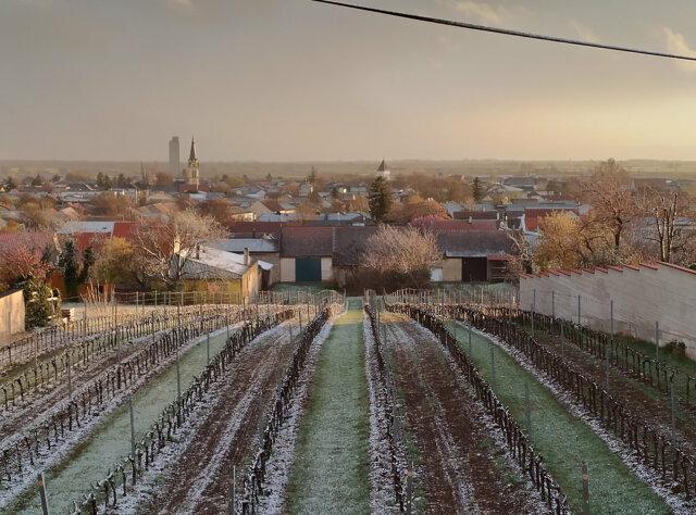 Blick über Gols, Sonnenuntergang. Im Vordergrund ein Weingarten in dem ein wenig Schnee liegt.