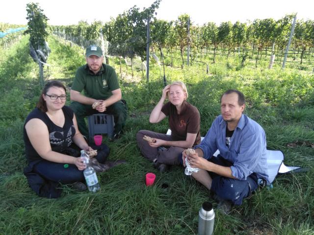 Wir sitzen zu viert am Rande eines Weingartens im Gras beim Mittagessen.