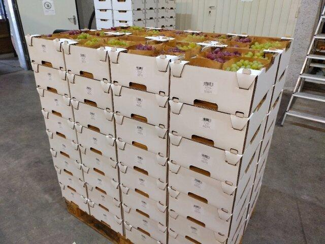 Eine Palette mit Kartonsteigen voller Weintrauben, fertig zur Auslieferung.